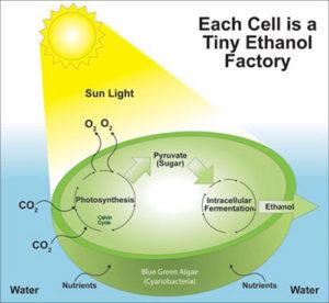 algae-system